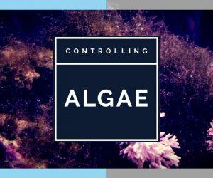 How to Control Algae in your Marine Aquarium