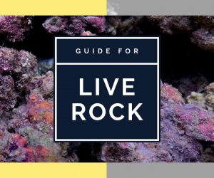 What is live rock? And do you need it?